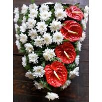 Jerba crizantema si anthurium