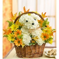 Aranjament  de toamna cu un catel din flori