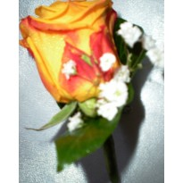 Cocarde naturale trandafiri cu gypsophila