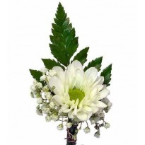 Cocarde crizantema santini
