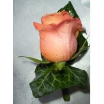 Cocarde din trandafiri naturali ci iedera