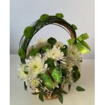 Cos  crizantema santini si plante