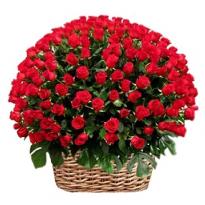 Cos imens cu 150  trandafiri