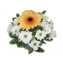Aranjament masa 1 gerbera si crizantema
