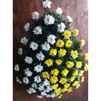 Coroana  60 crizanteme